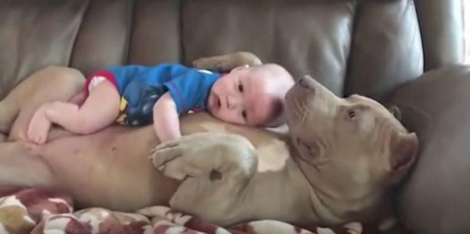 人間の赤ちゃんをお腹に乗せてソファーでくつろぐ犬