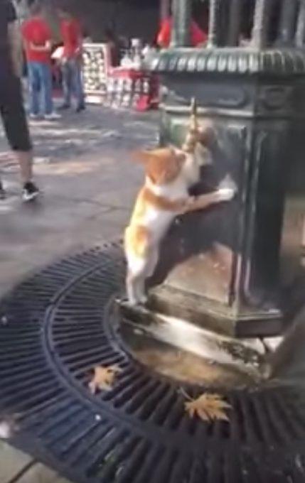おかしな体勢で蛇口から水を飲む猫