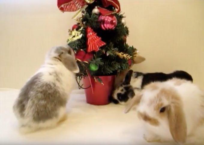 メリークリスマス!ツリーの前で大はしゃぎな子ウサギ達