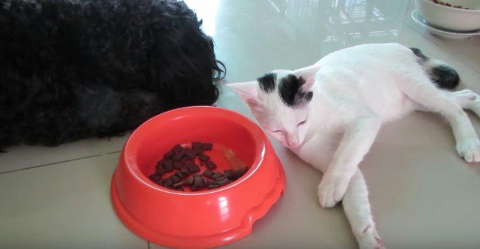 犬が寝ている隙にエサをそーっと横取りする猫