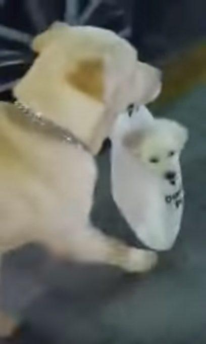 子犬を手提げ袋に入れて街中を散歩する母犬