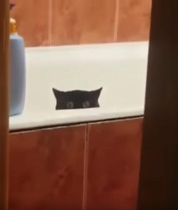 台所から魚を盗んだ犯猫がこちら!
