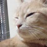 様子がおかしい猫。病院で驚愕の事実が判明!