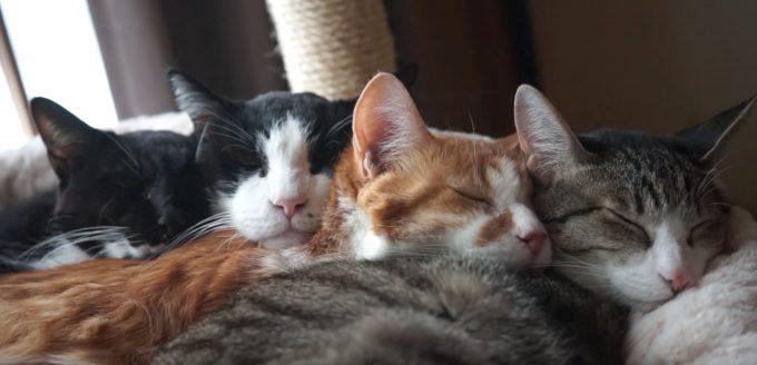 うもれたい。。。寒い冬の猫団子