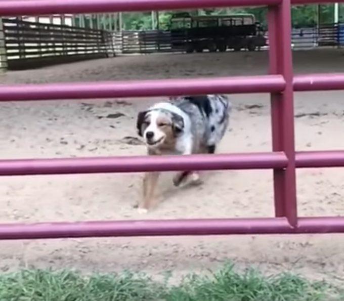 美しいフォームで柵をすり抜ける犬