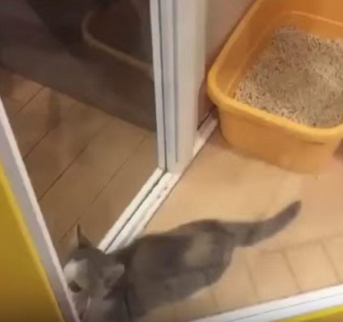 手をパタパタしながらジャンプする子猫が可愛すぎる!