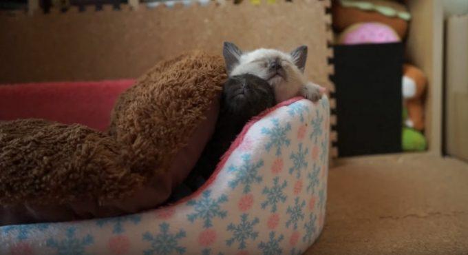 子猫が布団の隙間からニョキッと顔を出す瞬間