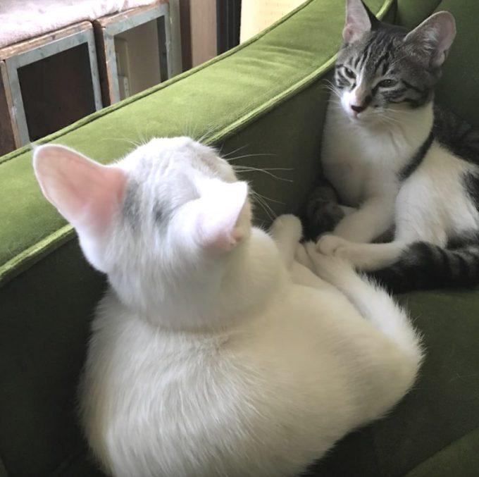 深い絆にほっこり。姉弟ネコの動画