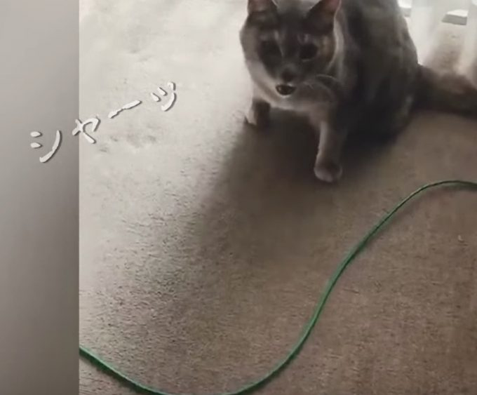 「ちゅーる」の威力半端ない!激おこ猫の機嫌がコロっと直る方法