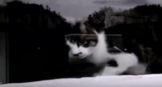 (未)届けられない!郵便物を拒絶する猫