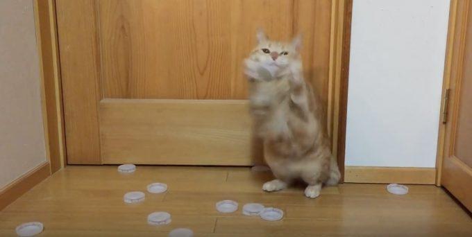 ゴールキーパーが上手な猫の動画