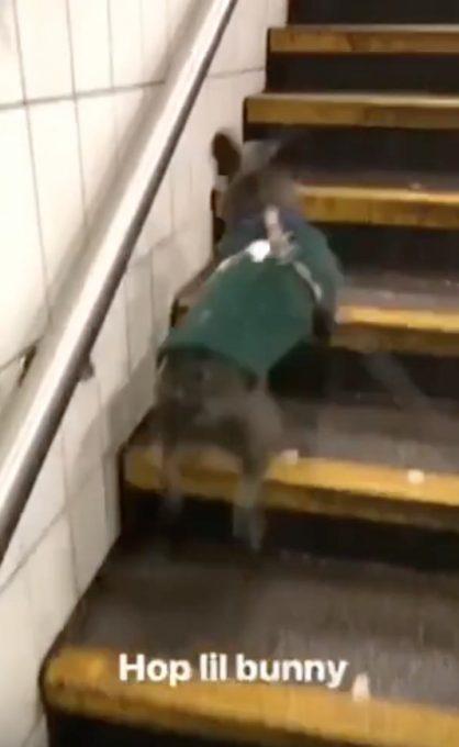 ピョンピョン?!階段の上り方が何か違う犬
