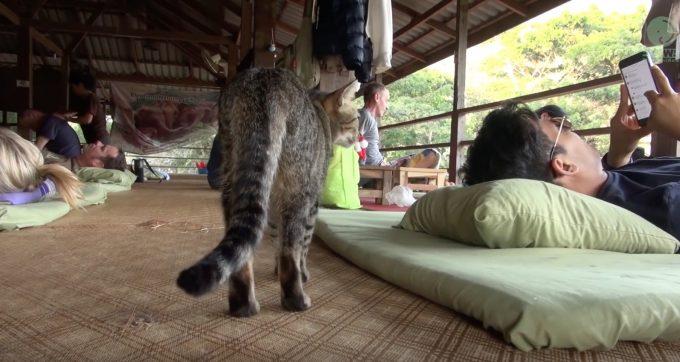 羨ましすぎる!タイ式マッサージと猫式マッサージを同時に受けられる施設
