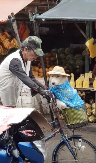 自転車カゴの中で雨の身支度をされる犬がなんだか可愛い動画