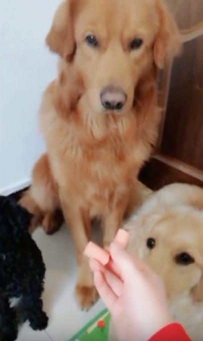 ソーセージを仲間に譲る優しい犬
