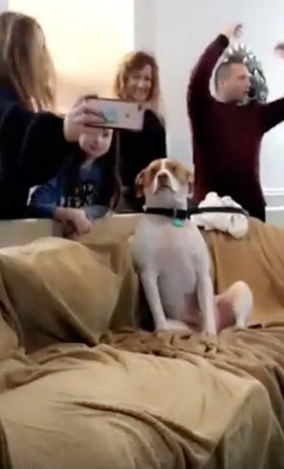 僕、パーティー苦手かも。。緊張で硬直している犬の動画