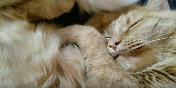 猫の寝言が可愛すぎる動画