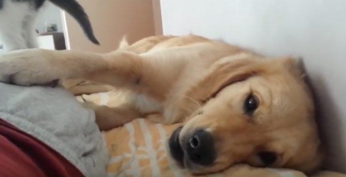 遊びたい子猫と眠たい犬の穏やかで熱き戦い