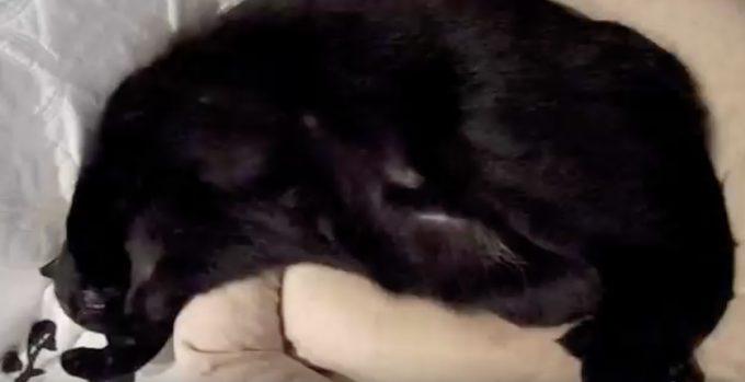 「シェー!」のポーズで寝る黒猫さん