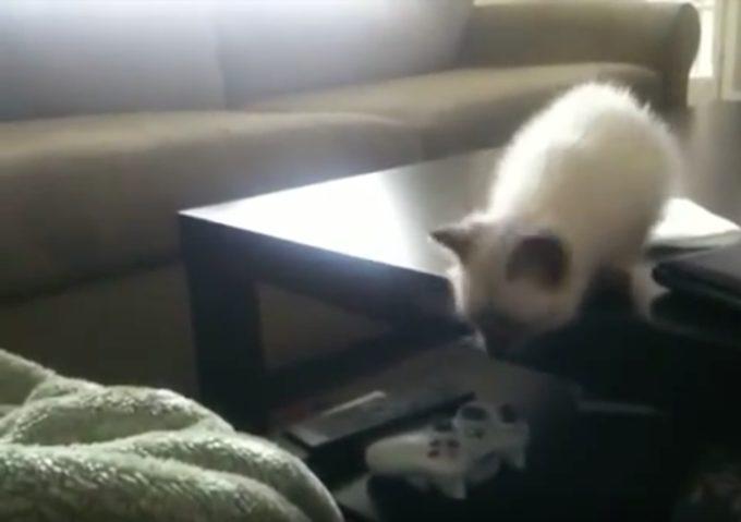やっぱり可愛い!オチが読めるけど見てしまう、子猫がジャンプに失敗する動画